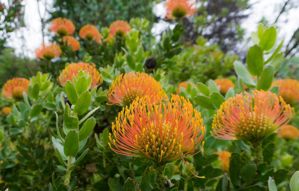 A visit to the Botanical Garden